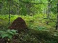 Муравейник - panoramio (7).jpg