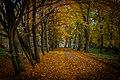 Осінні алеї в парку.jpg