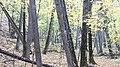По пути на Соляные. Чистопольский р-н. РТ. Сентябрь 2014 - panoramio.jpg