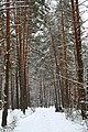 Пуще-Водицький курортний лісопарк 1952.JPG