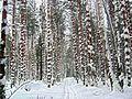Снежные узоры. - panoramio.jpg