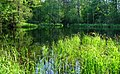 Старица Вилии. River Neris - bayou. - panoramio.jpg