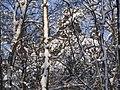 Украина, Киев - Голосеевский лес 154.jpg