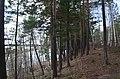 """У лыжной базе """"Снежинка"""" - panoramio.jpg"""