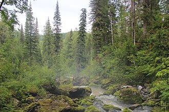 Forest cover by federal subject in Russia - Taiga in Tashtagolsky District, Kemerovo Oblast