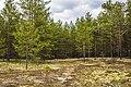 Экологическая тропа. Якша MG 8842.jpg