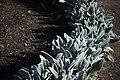 عکس از گلها و گیاهان باغ بوتانیکال تفلیس - گرجستان 29.jpg