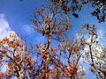 نمای آسمان و درخت.jpg