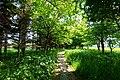 あいの里緑道 (Ainosato green road) - panoramio.jpg