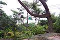 千光寺公園 Senkoji Park - panoramio (1).jpg