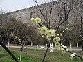 南京古城墙 - panoramio (4).jpg
