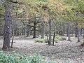 御泉水自然園 - panoramio (5).jpg