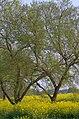 柳風公園 Yanagikaze Park - panoramio (1).jpg