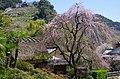 賀名生皇居跡(重要文化財堀家住宅) 2014.3.28 - panoramio.jpg