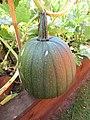 -2019-08-13 Field pumpkin, Trimingham, Norfolk (1).JPG