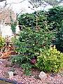 -2019-12-05 Christmas tree, Church Road, Trimingham.JPG