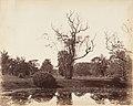-Botanical Gardens, Calcutta- MET DP147448.jpg