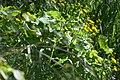 020180 0167 Oberes Santal in Trepcza, Beskiden im Frühling.jpg