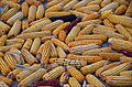 0308 - Nordkorea 2015 - landwirtschaftliche Kooperative Chonsam (22950135652).jpg