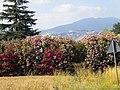 04013 Sermoneta, Province of Latina, Italy - panoramio (2).jpg
