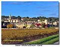 05-11-15-e1-Saint Michel d'Euzet-30200 (Gard).JPG