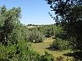 07-05-2017 Countryside near Branqueira.JPG