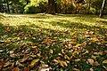 131103 Hokkaido University Botanical Gardens Sapporo Hokkaido Japan06bs.jpg