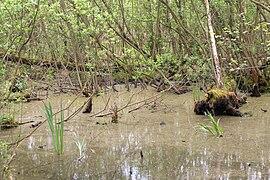15-05-09-Biosphärenreservat-Schorfheide-Chorin-Totalreservat-Plagefenn-DSCF5571-RalfR.jpg