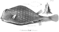 1837 BostonJournal NaturalHistory v1 plate8 Pendleton.png