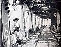 1903 Capri Marie Louise of Hanover.jpg