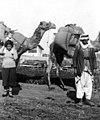 1925 ערבים מביאים גפת לצורך הסקת תנור האפיה 1925 - iבית אלפאi btm13861.jpeg