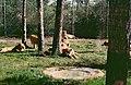 2002-04-28 5310 Gänserndorf die Löwen.jpg