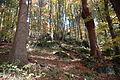 2007-10-20 (4) Wood, Wald.JPG
