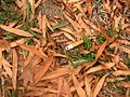 2008-10-21 10-11-20annajcoopercirclecigarettestub.JPG