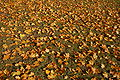 2009-10-herbst-by-RalfR-22.jpg