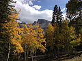 2014-09-15 15 27 33 View of Wheeler Peak amid Aspens showing autumn foliage and Engelmann Spruces along the Alpine Lakes Trail in Great Basin National Park, Nevada.JPG