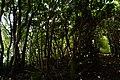 2016-08-05 Kami-shima Island,神島監的哨跡~ニワの浜・弁天岬 DSCF6475.jpg