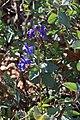 2016.04.22 15.08.25 IMG 4963 - Flickr - andrey zharkikh.jpg