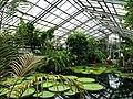 2018-06-18-bonn-meckenheimer-allee-169-botanischer-garten-victoriahaus-07.jpg