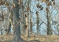 500px photo (185872263).jpeg