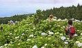 Açores 2010-07-23 (5161788405).jpg