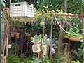 AJM 051 Garden Cuba.JPG