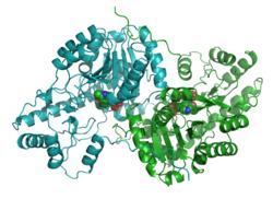 Zytoplasmatische Aspartat-Aminotransferase