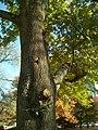 A Tree - panoramio.jpg