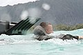 A U.S. Marine from Combat Assault Company, 3rd Marine Regiment swims to shore off the coast of Marine Corps Training Area Bellows, Hawaii, Aug. 25, 2009 090825-M-KL398-006.jpg