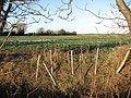 A new hedge in the making - geograph.org.uk - 1635046.jpg
