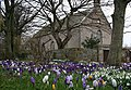 A profusion of crocuses by Fordyce Church of Scotland. - geograph.org.uk - 353707.jpg