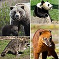 A special composite of bears 2.jpg