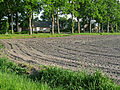 A view on a agriculture field in the sunlight of late afternoon; North Netherlands in May 2012.jpg