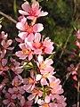 Ab plant 1543.jpg